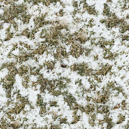 snow ground grass